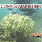 STUDY: Are Hawaiian Corals Adjusting to Warmer Temperatures?