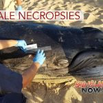 Results of Whale Necropsies Revealed