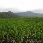Hawai'i to Receive $1.9 Mil for Small-Scale Agriculture
