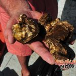 Oysters to Help Improve Water Quality in Pearl Harbor