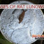 DOH Confirms 2 More Cases of Rat Lungworm Disease