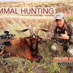 PTA Offering 2-Day Mammal Hunt