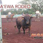 Bull Rider Injured During Day 1 of Pana'ewa Rodeo