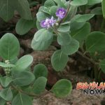 Workshop: Learn Landscaping with Native Hawaiian Plants