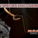 New Species Discovered in Lava Tubes