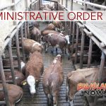 Dairy to Terminate Operations & Remove Cows From Confinement