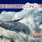 Whale Count for the 2021 Season