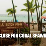 Kahalu'u Beach Park to Close for Coral Spawning Events