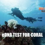New eDNA Technology Used to Assess Coral Reefs