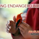 Efforts to Save Endangered Birds Boosted by $25K Donation