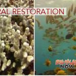 Legislation to Restore & Conserve Coral Reefs
