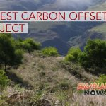 Hawai'i's First Forest Carbon Offset Project Underway