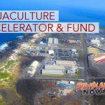 State Launches Hawai'i-Based Aquaculture Accelerator & Fund