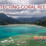 Place-Based Management Can Protect Coral Reefs in a Changing Climate
