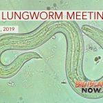 DOH Rat Lungworm Disease Meeting Set for April 22
