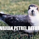 Endangered Hawaiian Petrel Heard on Maunakea After 50 Years of Silence