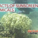 Legislation to Study Impacts of Sunscreen Chemicals on Coral Reefs