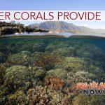 Super Corals in Kaneohe Bay Provide Hope for World's Reefs