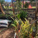 Housing Grants Available via REIT Way Hawaii