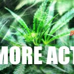 Rep. Gabbard Introduces Bill to End Marijuana Prohibition