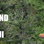 Rapid ʻŌhiʻa Death Detected on Maui