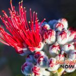 Grant Will Supply ʻŌhiʻa Seeds for Future Restoration
