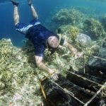 Hawai'i Sea Grant College Program Receives Nearly $1.4M for Aquaculture Research