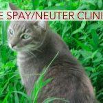 Free Feline Spay, Neuter Clinic in Pahoa