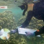 Citizen Scientists Use Ko'a Card for Coral
