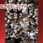 Bleached: Coral Damage in 2019 Compared to 2015
