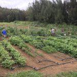 Hilo Nonprofit Farm Receives Government Grant