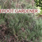 Barefoot Gardener: Spicing It Up