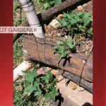 Barefoot Gardener: How Sweet It Is