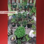 Barefoot Gardener: Grow a Tea Garden