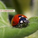 Barefoot Gardener, Part 1: Bug Off!