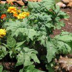Barefoot Gardener: Bug Off! Part 2