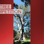 New Champion Sought for annual Hawai'i Big Tree Competition