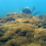 Newly Discovered Algae Infesting Hawai'i's Northwestern Waters