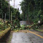 Several Downed Utility Poles Close Hilo Roads