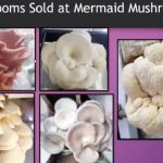 Mermaid Mushrooms Wins HIPlan Grand Prize