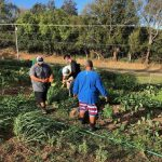 Men of Pa'a Collaborate with 1 Heart HUB to Serve Community