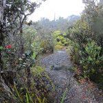 Kaulana Manu Nature Trail Opens in Shadow of Mauna Kea