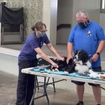Donation Provides Extra First Aid Resources to HPD Canines