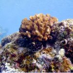 VIDEO: Coral Spawning Observed After Popular Beaches Closed