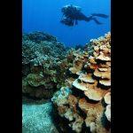 UH Chosen to Lead New NOAA Marine Research Program