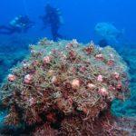 Researchers Suspect Increase of Invasive Alga at Papahānaumokuākea Marine National Monument